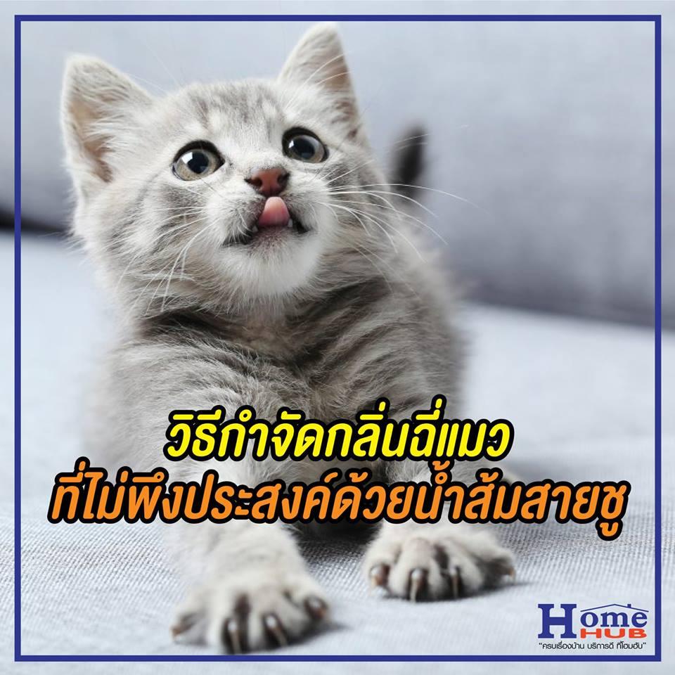กำจัดฉี่แมว